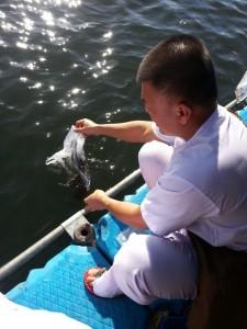 20140512_d-releasefish